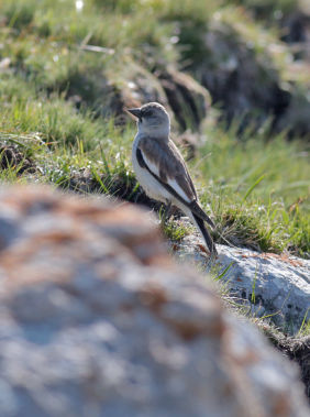 Birdwatching in the Caucasus Mountains