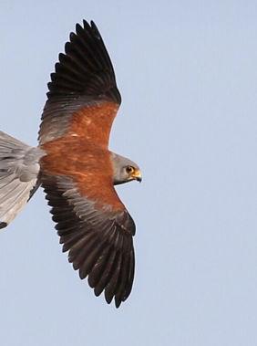 Birdwatching in Shirvan National Park