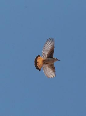 Birdwatching in Nakhchivan